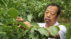 <b>太行新愚公-河北农业大学教授、博士生导师李保国</b>