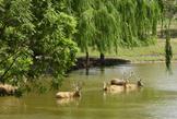 北京麋鹿苑博物馆:北京麋鹿生态实验中心