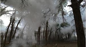 额济纳旗首次进行烟剂防治天然胡杨林虫害作业(图)