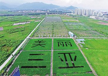 稻田里种出五彩画卷