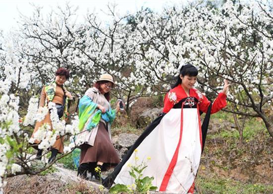 重庆澄江镇千树万树李花开 吸引众多市民和游客前来踏青赏花