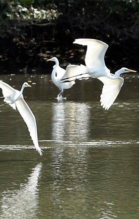 北京一树林公开叫卖野生鸟 多为一二级保护动物_中国