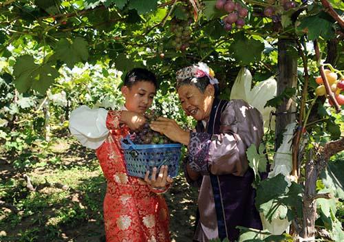 大兴葡萄文化节