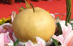 北京大兴梨:果汁多 香气浓 可溶性固形物含量高