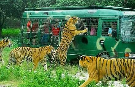 在北京延庆八达岭野生动物园内