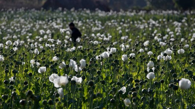 缅甸海洛因生产世界第二