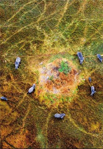 航拍非洲动物大迁徙场面壮观