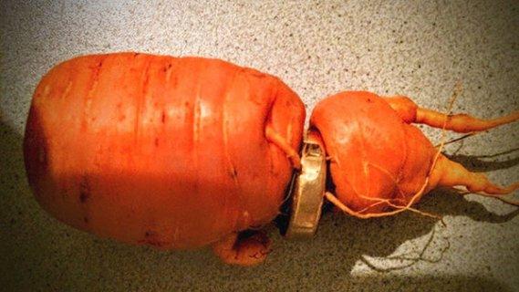 德国老太干农活痛失婚戒 3年后长在萝卜上(图)