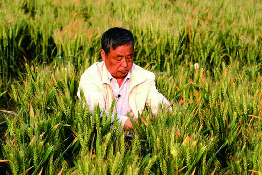 赵振东在观察小麦试验.jpg