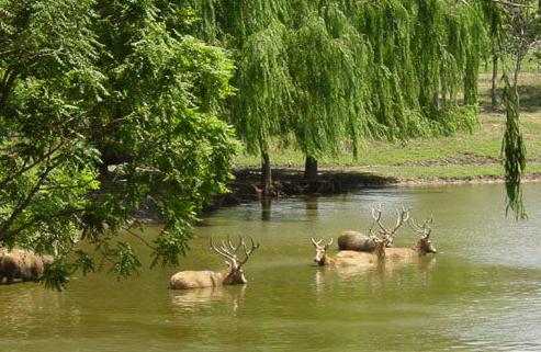 北京麋鹿苑博物馆