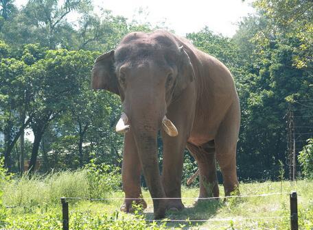一名意大利游客为拍好照片走近一头大象却被大象袭击踩死.