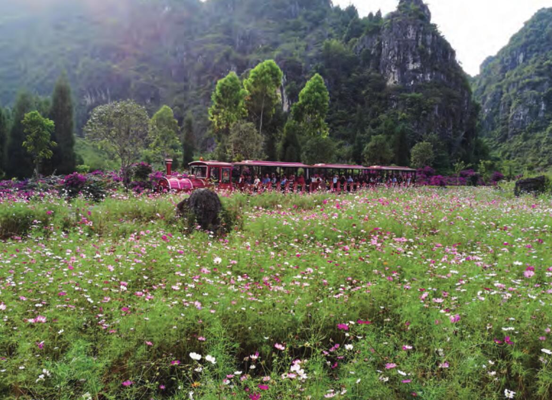 花海 在兴义万峰林景区,花海绽放,观光小火车开行,每天游客不断.