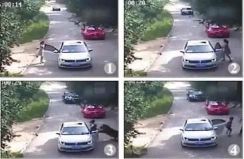 八达岭老虎伤人视频曝光 咬伤女子质疑动物园不下车救援