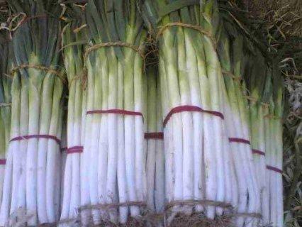 黄岭大葱:叶青肉厚 茎长白嫩