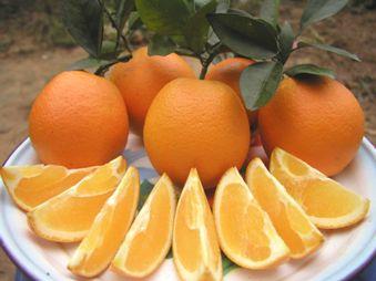 信丰脐橙:大而无核 肉厚汁多