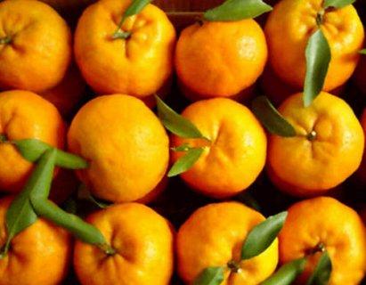 从江椪柑:酸甜可口 营养丰富
