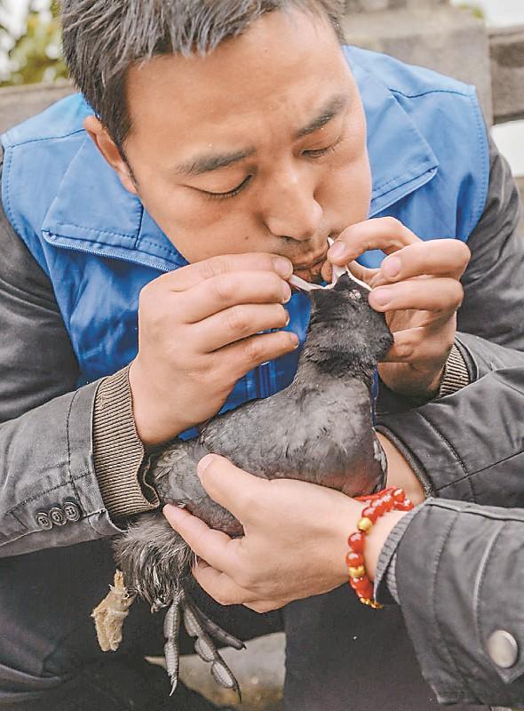 王林远喂白骨顶鸡消炎药