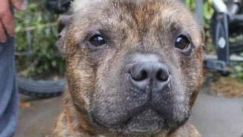动物慈善机构为这只狗求情