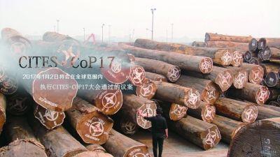 国际新规执行,给红木市场带来巨大冲击。