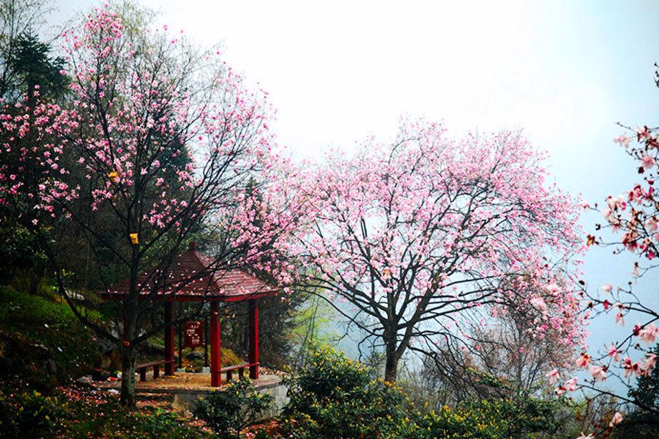 药王谷:我国第一个以中医药养生为主题的山地旅游度假