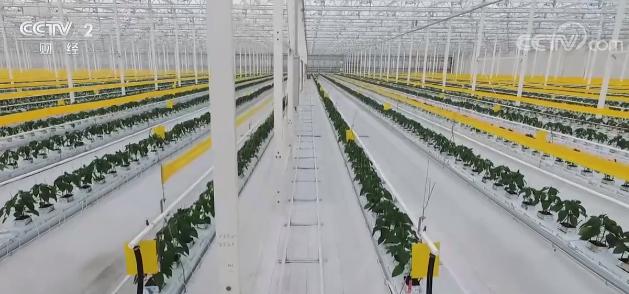 """科技为农业发展插上翅膀 上海""""无人管理""""农场引领农业智能化"""